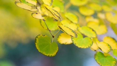 Bright yellow leaves on a tree branch
